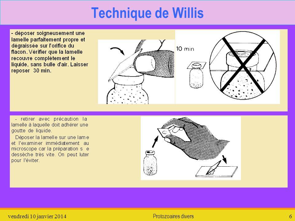 Technique de Willis dimanche 26 mars 2017 Protozoaires divers
