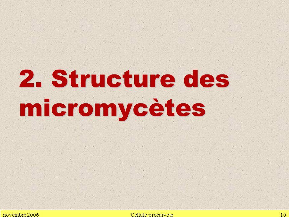 2. Structure des micromycètes