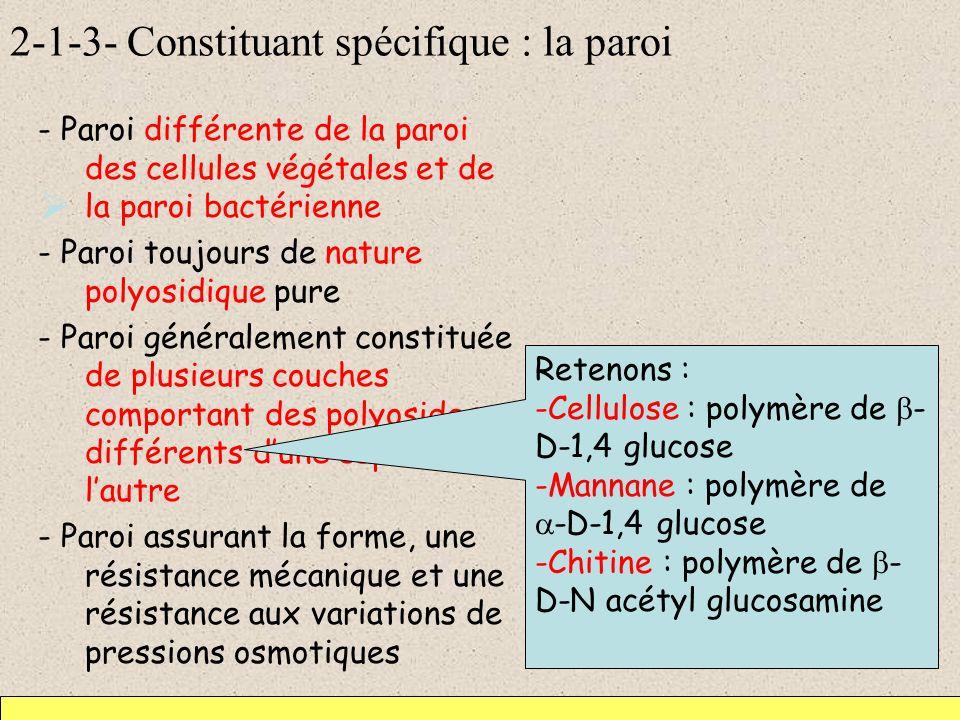 2-1-3- Constituant spécifique : la paroi