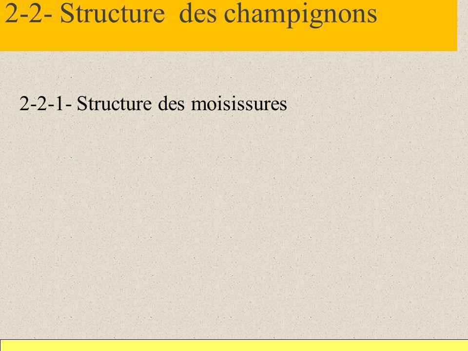 2-2- Structure des champignons