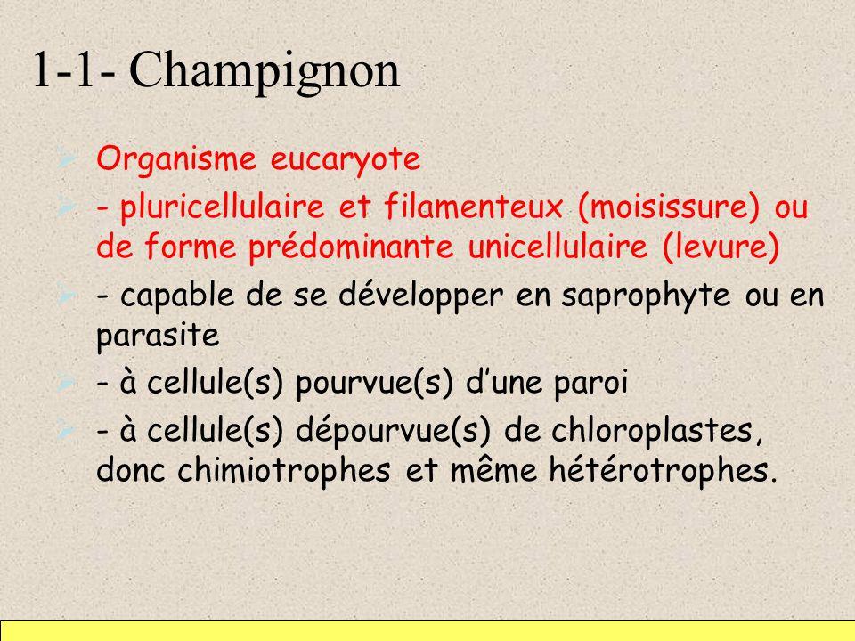 1-1- Champignon Organisme eucaryote