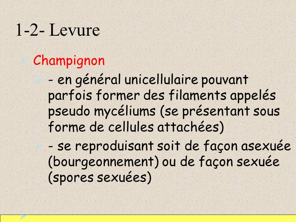 1-2- Levure Champignon.