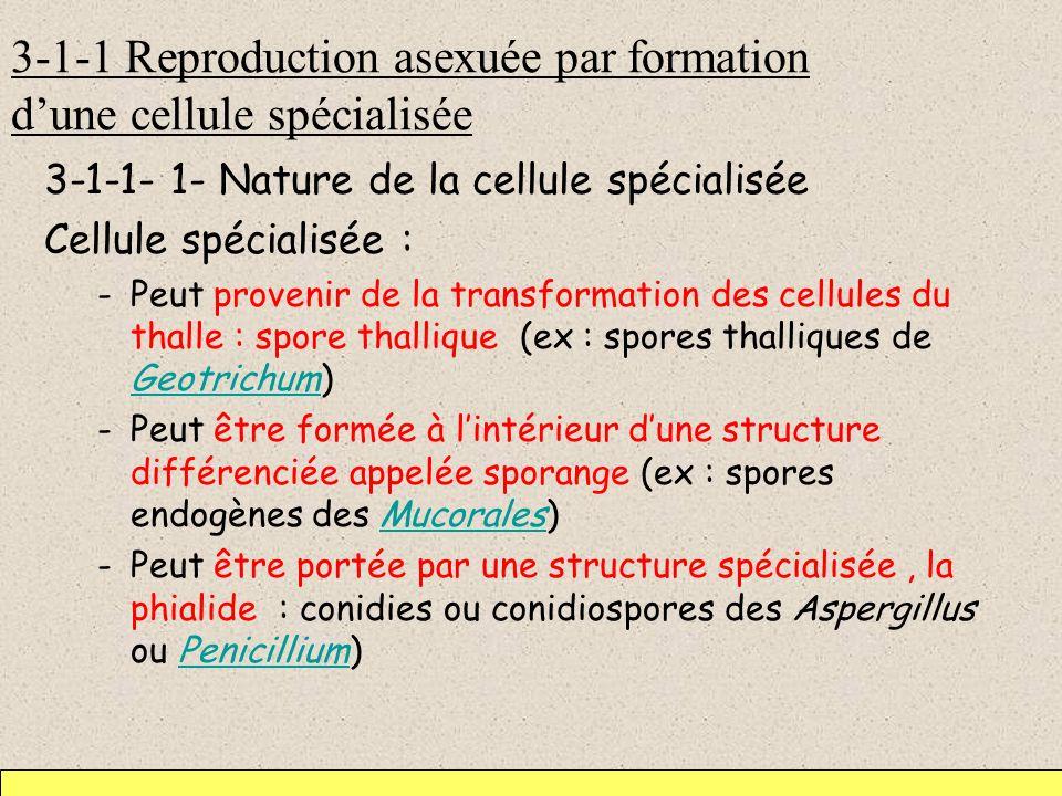 3-1-1 Reproduction asexuée par formation d'une cellule spécialisée