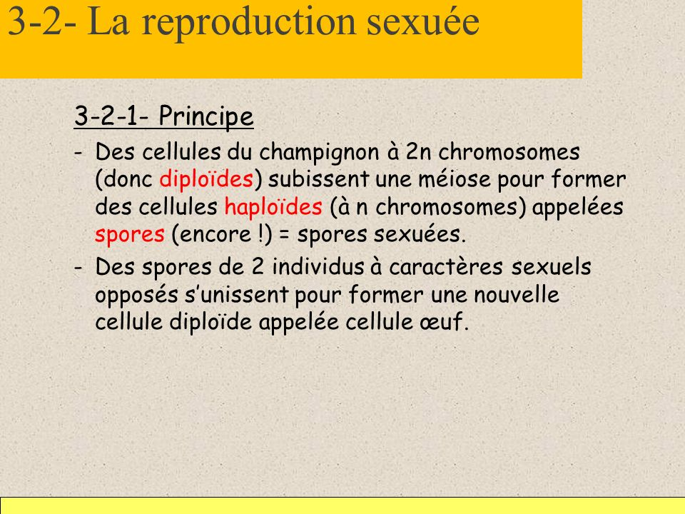 3-2- La reproduction sexuée