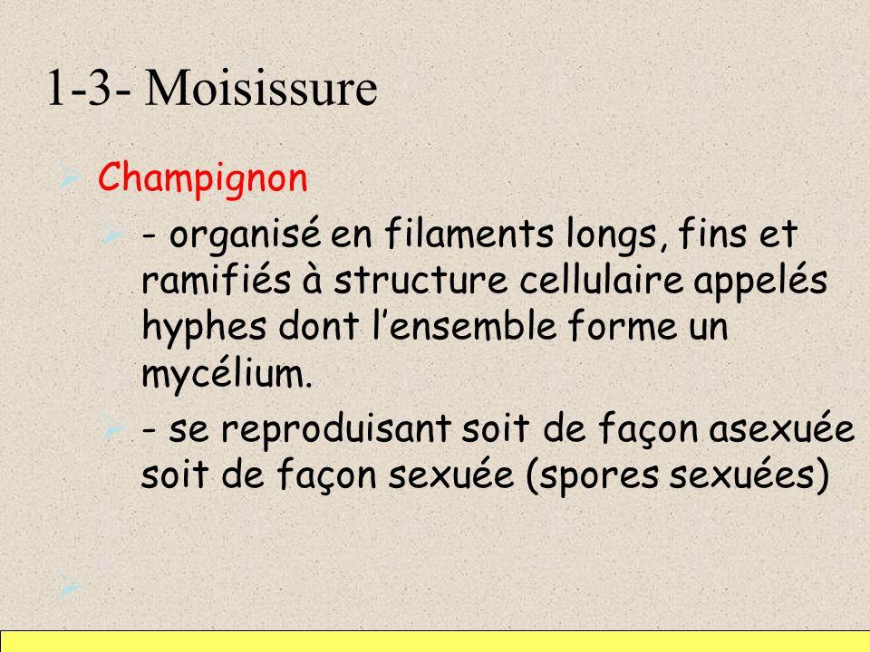 1-3- Moisissure Champignon