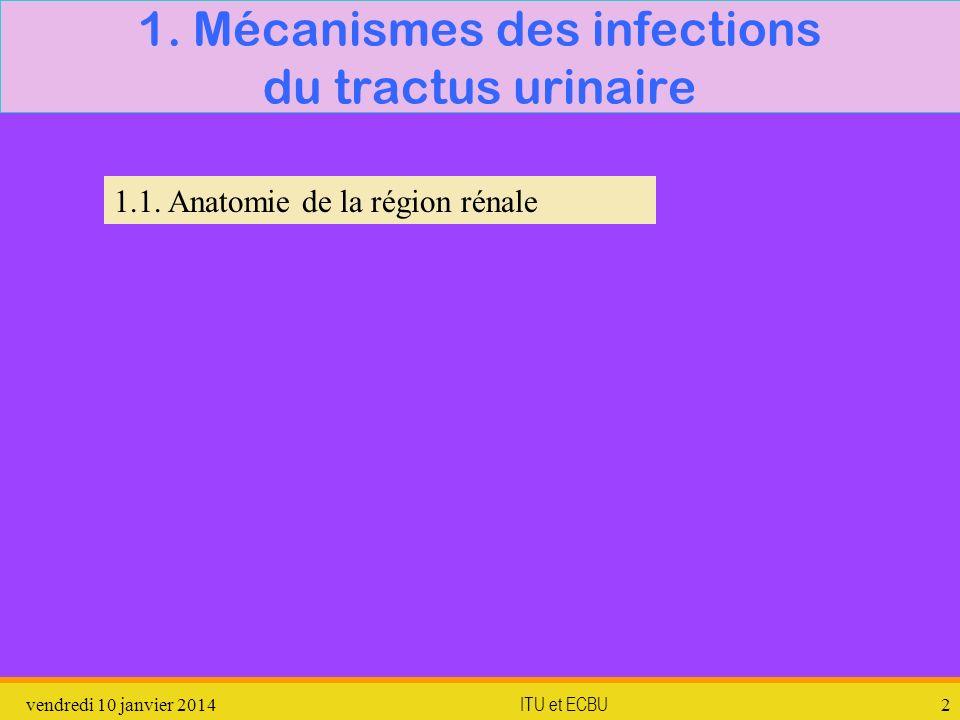 1. Mécanismes des infections du tractus urinaire