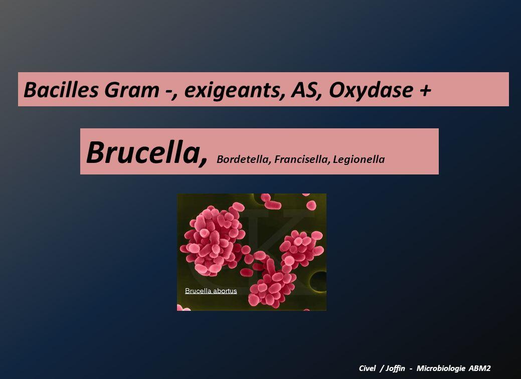 Brucella, Bordetella, Francisella, Legionella