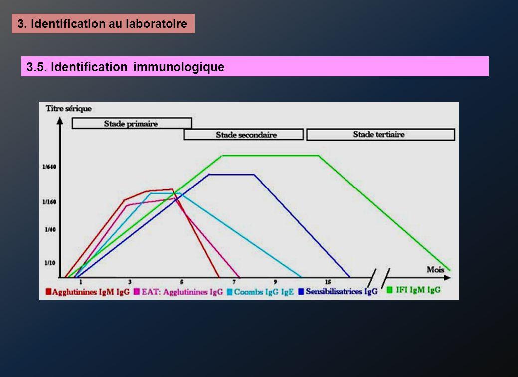 3.5. Identification immunologique