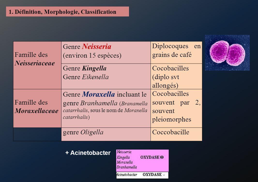 Famille des Neisseriaceae Genre Neisseria (environ 15 espèces)