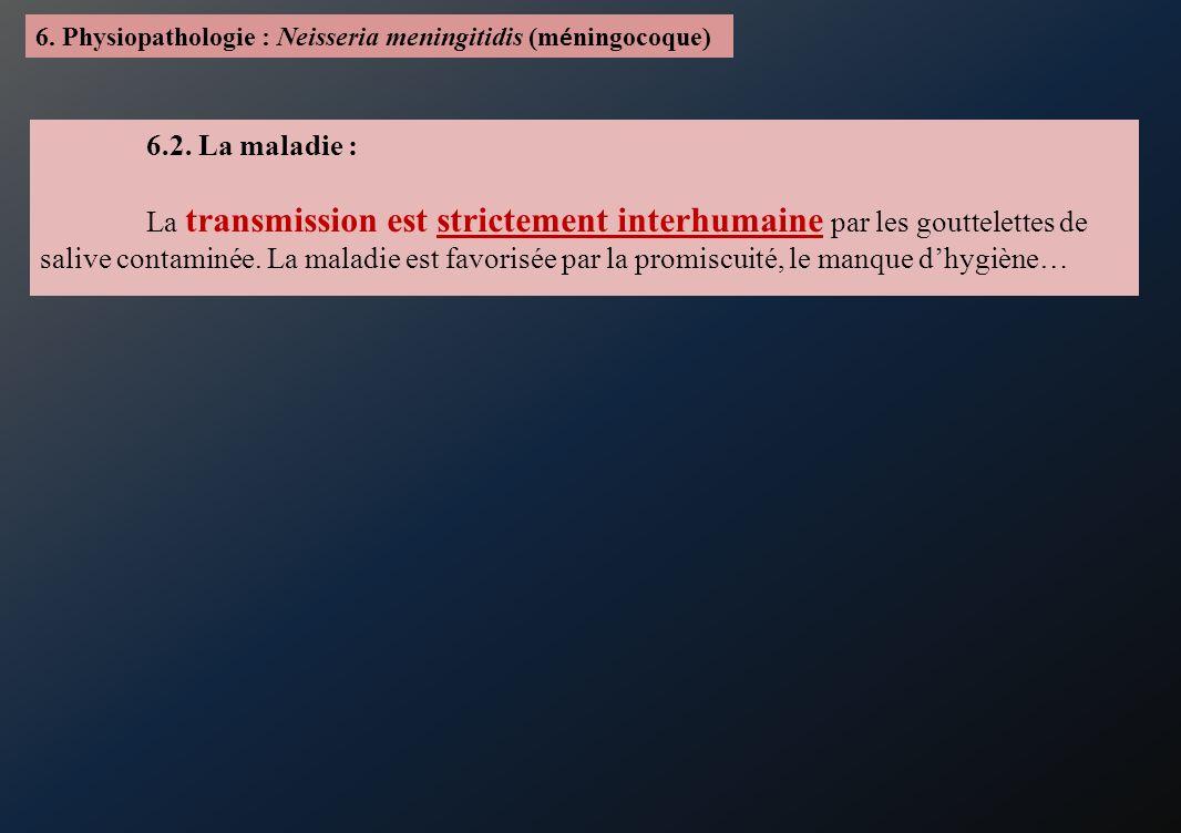 6. Physiopathologie : Neisseria meningitidis (méningocoque)
