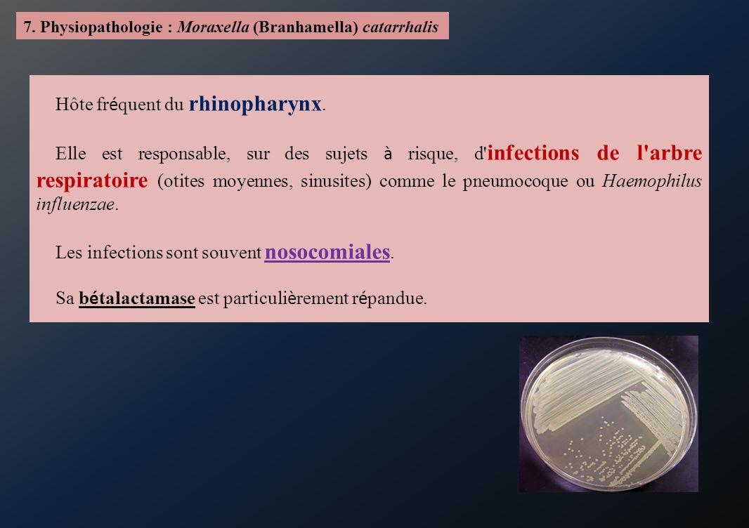 Hôte fréquent du rhinopharynx.