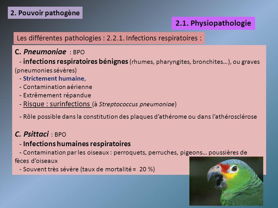 Les différentes pathologies : 2.2.1. Infections respiratoires :