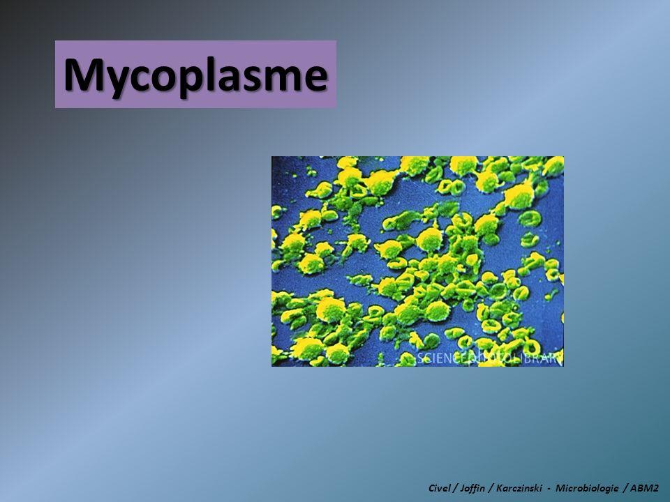 Mycoplasme Civel / Joffin / Karczinski - Microbiologie / ABM2