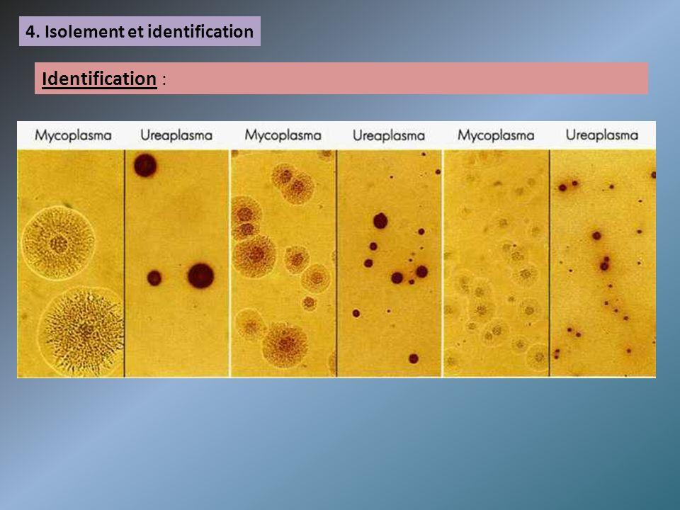 4. Isolement et identification