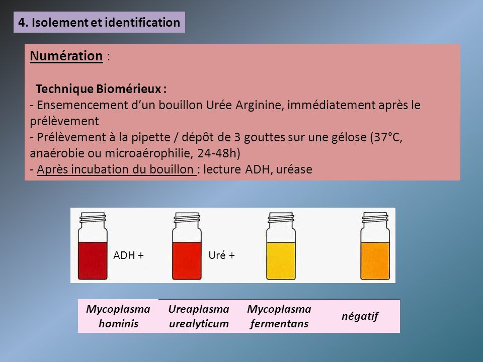 Ureaplasma urealyticum Mycoplasma fermentans