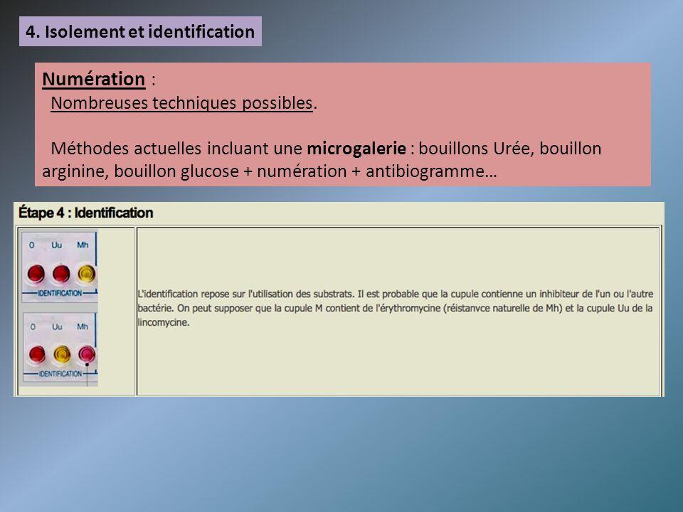 Numération : 4. Isolement et identification