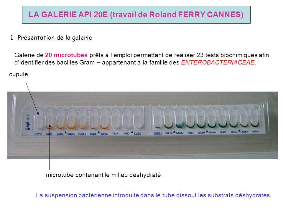 LA GALERIE API 20E (travail de Roland FERRY CANNES)