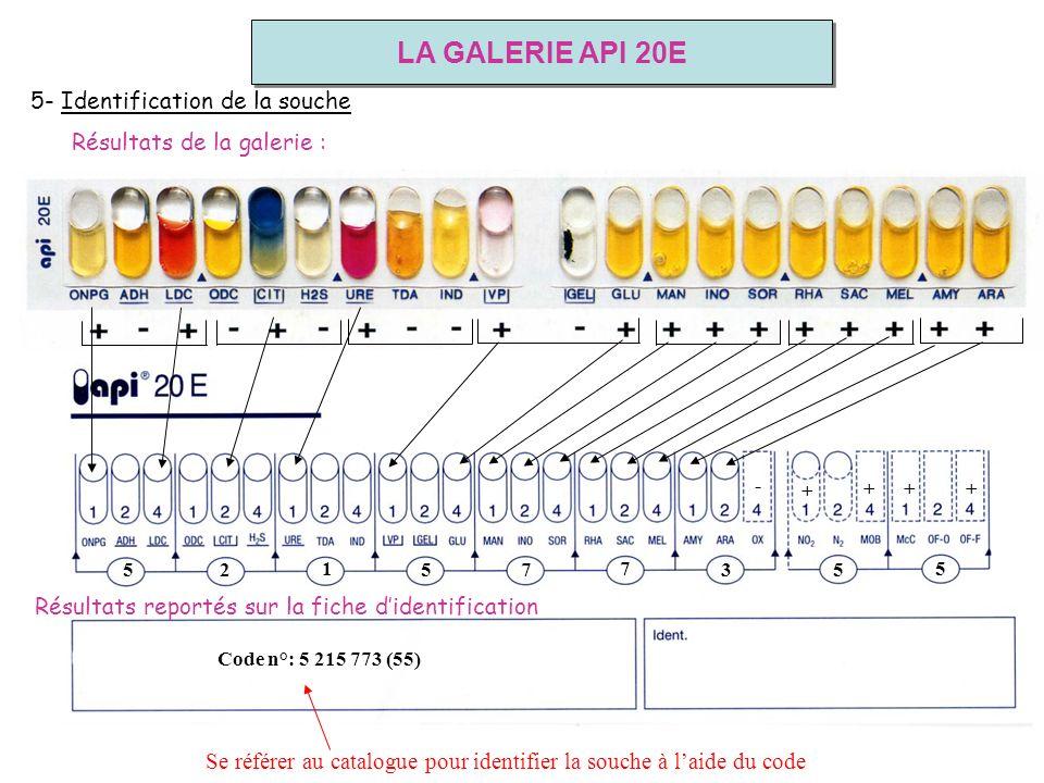 LA GALERIE API 20E 5- Identification de la souche