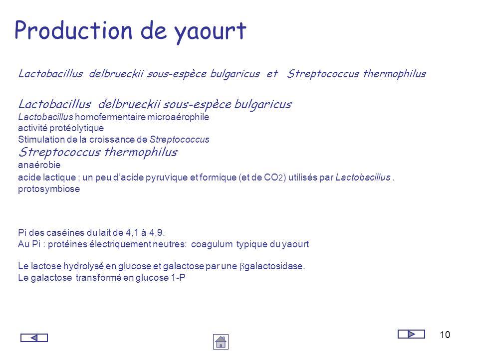 Production de yaourt Lactobacillus delbrueckii sous-espèce bulgaricus