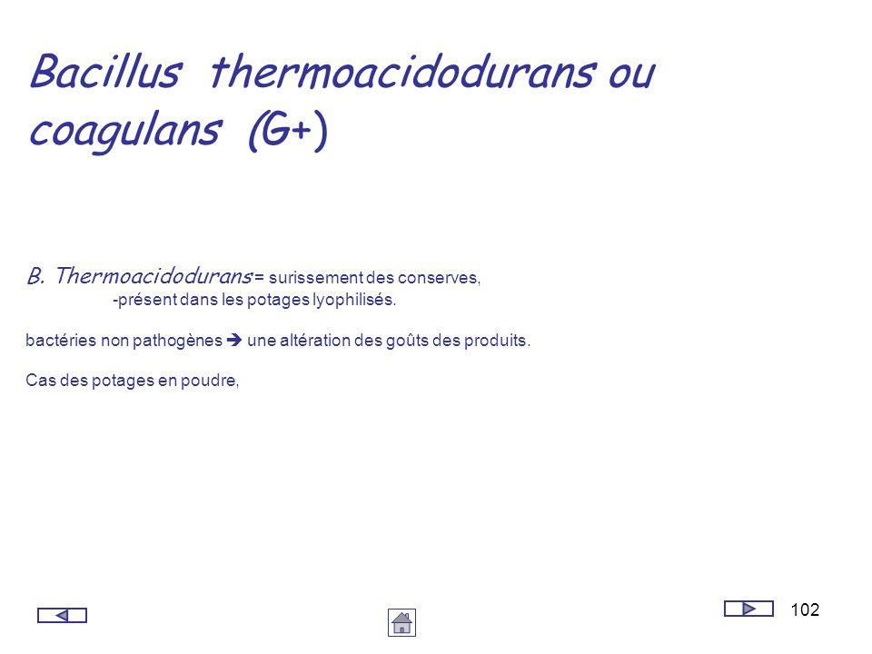 Bacillus thermoacidodurans ou coagulans (G+)