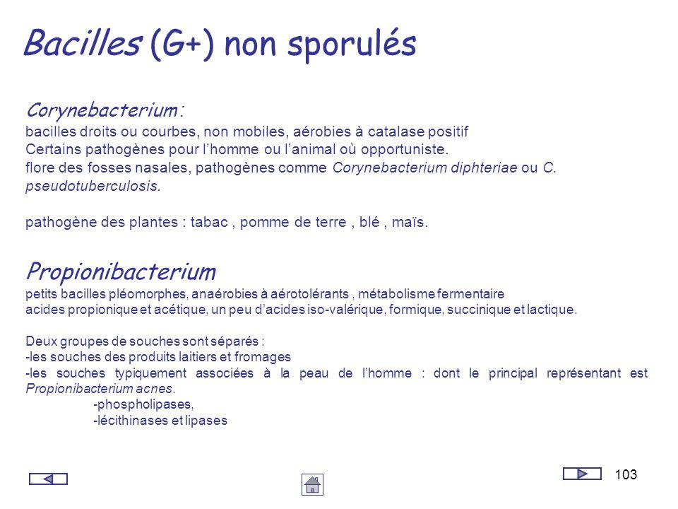 Bacilles (G+) non sporulés