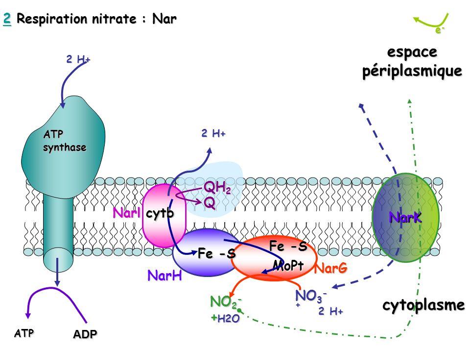 2 Respiration nitrate : Nar