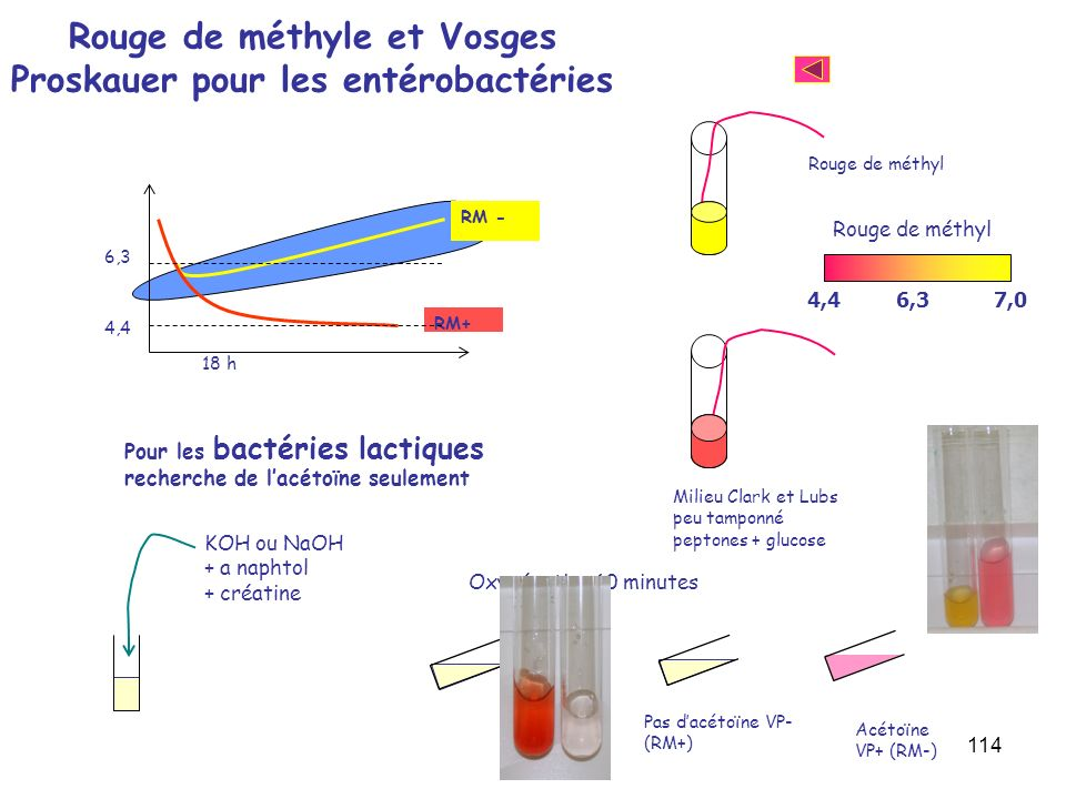 Rouge de méthyle et Vosges Proskauer pour les entérobactéries