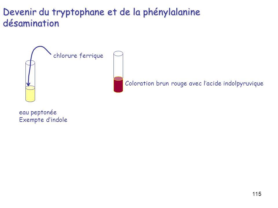 Devenir du tryptophane et de la phénylalanine désamination