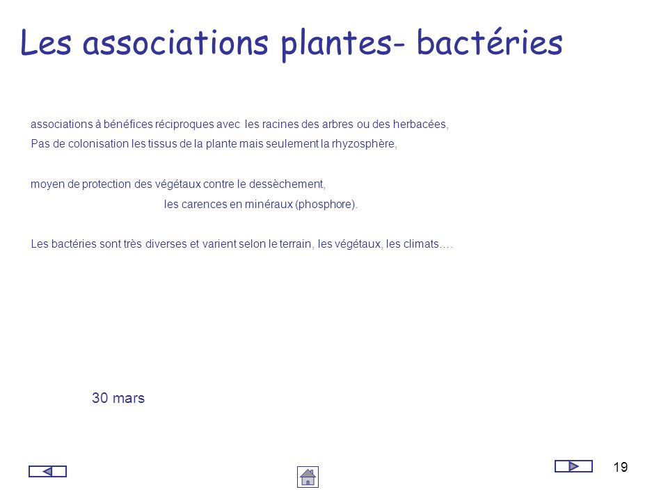 Les associations plantes- bactéries