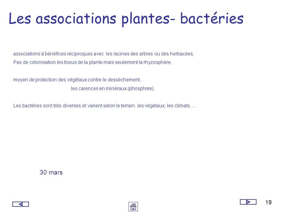 Les associations plantes- bactéries