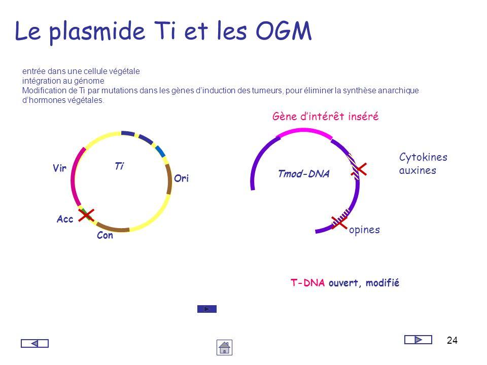 Le plasmide Ti et les OGM