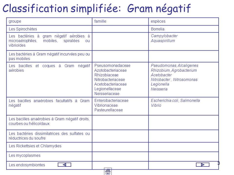 Classification simplifiée: Gram négatif