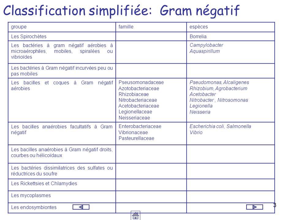 Classification simplifiée: Gram négatif