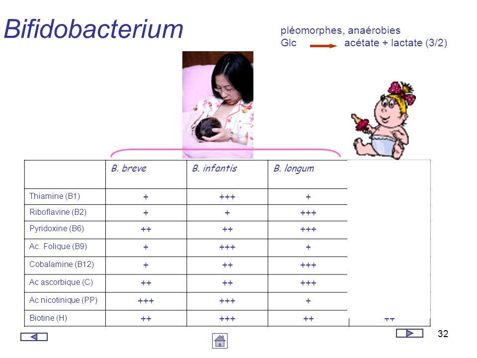 Bifidobacterium pléomorphes, anaérobies Glc acétate + lactate (3/2)