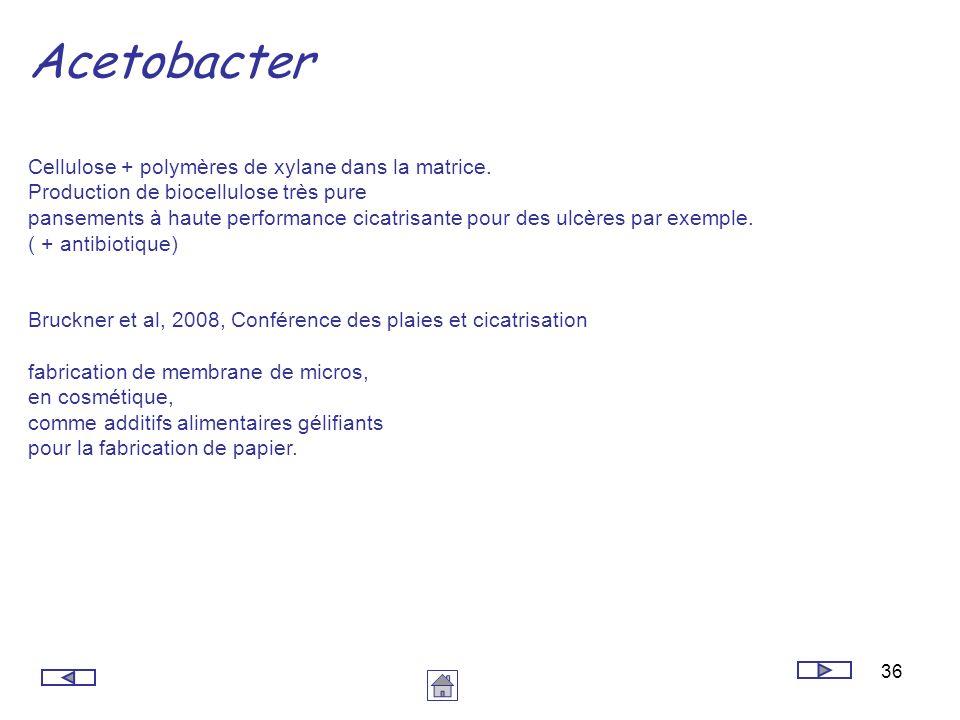Acetobacter Cellulose + polymères de xylane dans la matrice.
