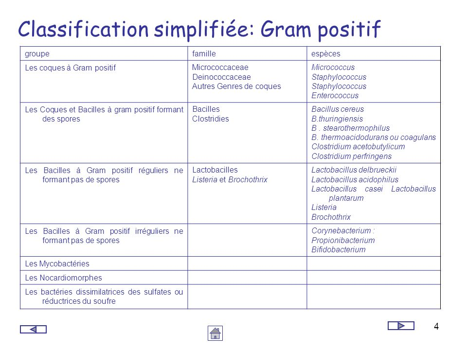 Classification simplifiée: Gram positif