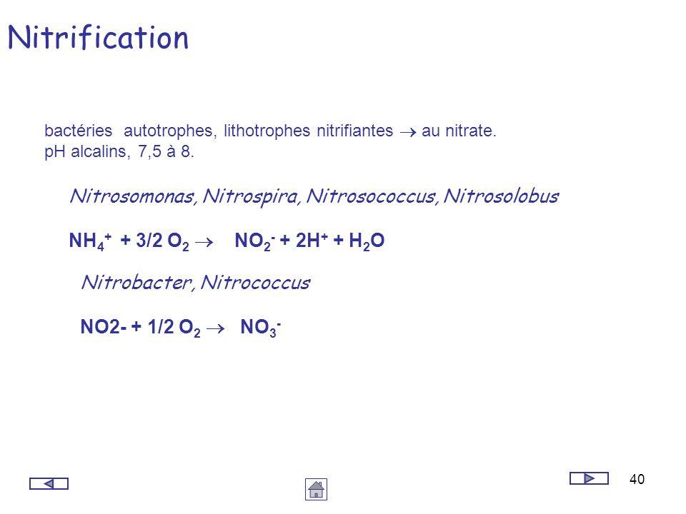 Nitrification Nitrosomonas, Nitrospira, Nitrosococcus, Nitrosolobus