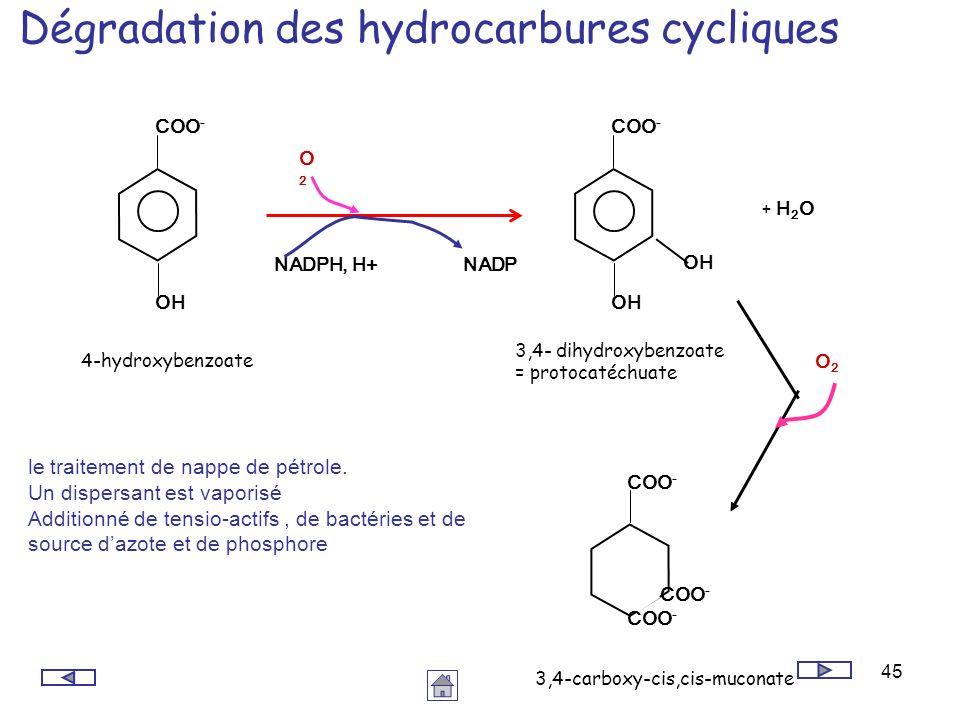 Dégradation des hydrocarbures cycliques