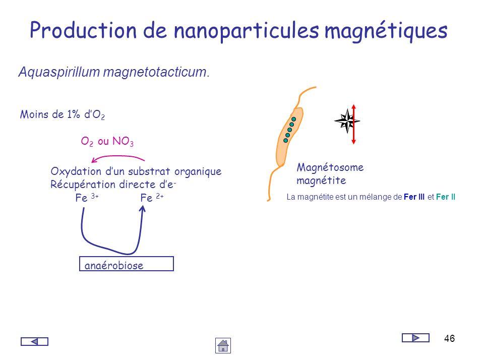 Production de nanoparticules magnétiques