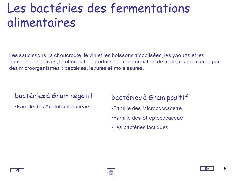 Les bactéries des fermentations alimentaires