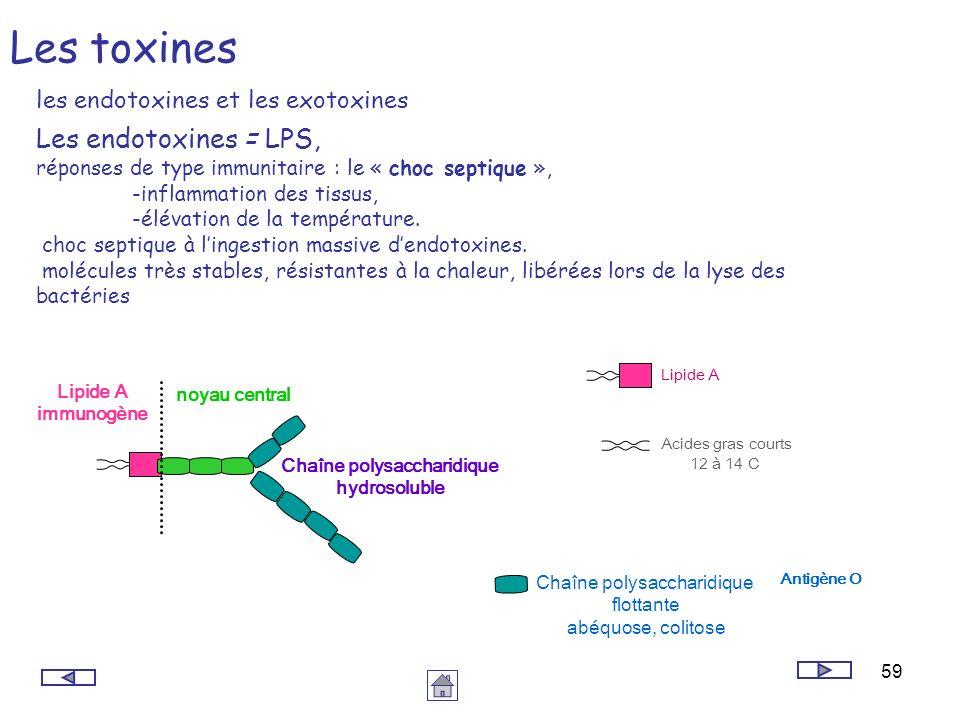 Chaîne polysaccharidique