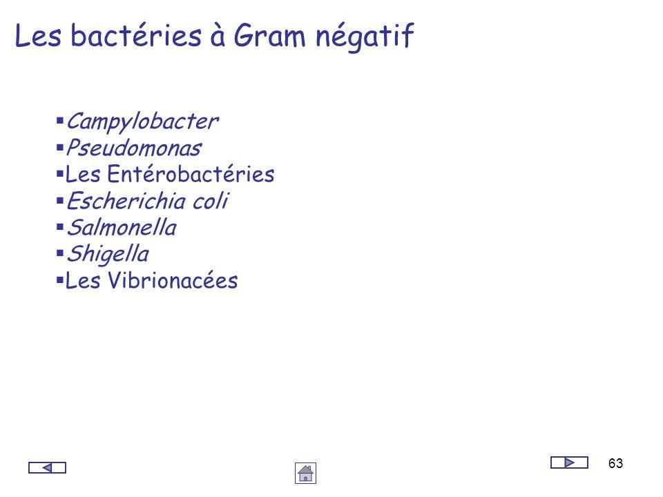 Les bactéries à Gram négatif