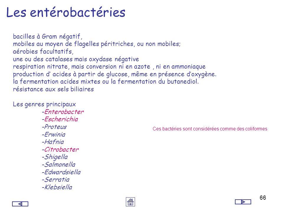 Les entérobactéries bacilles à Gram négatif,
