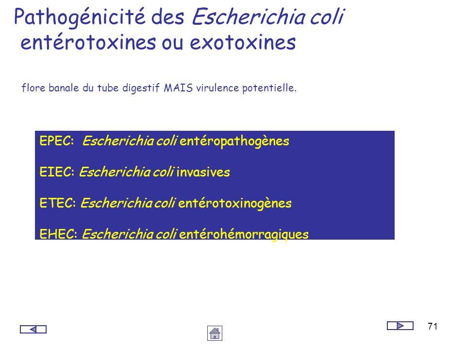 Pathogénicité des Escherichia coli entérotoxines ou exotoxines