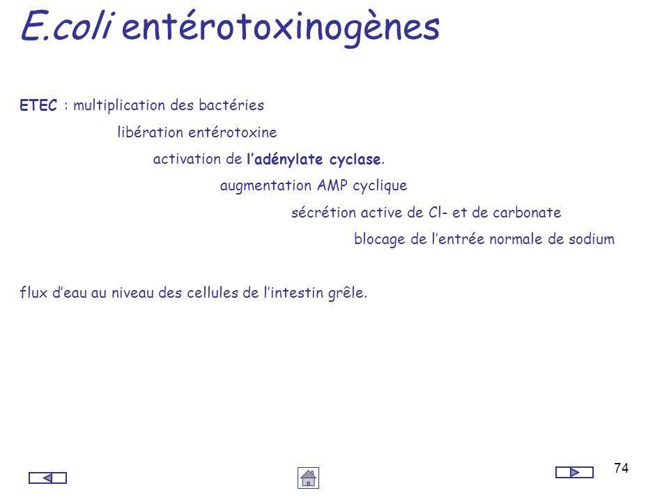 E.coli entérotoxinogènes