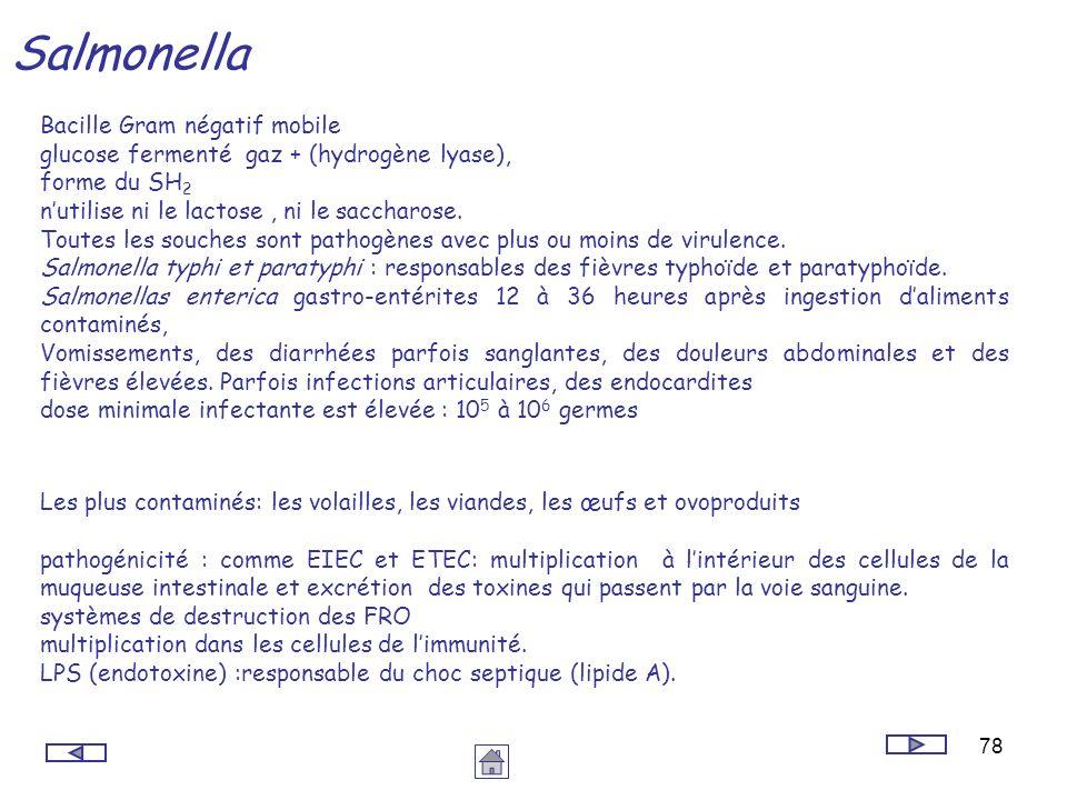 Salmonella Bacille Gram négatif mobile