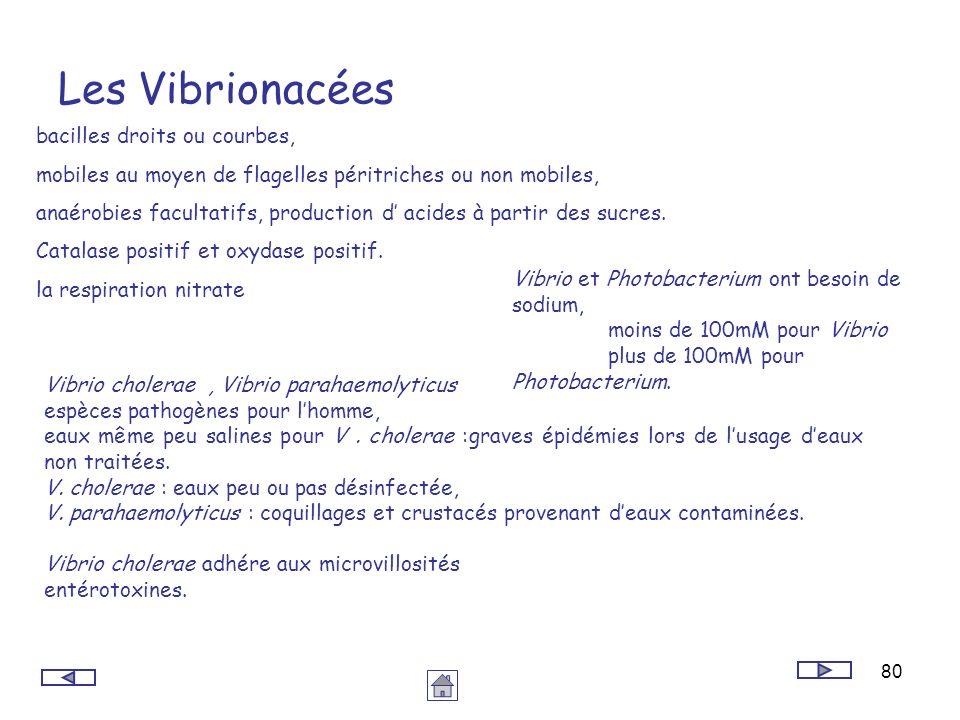 Les Vibrionacées bacilles droits ou courbes,