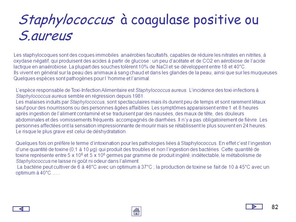 Staphylococcus à coagulase positive ou S.aureus