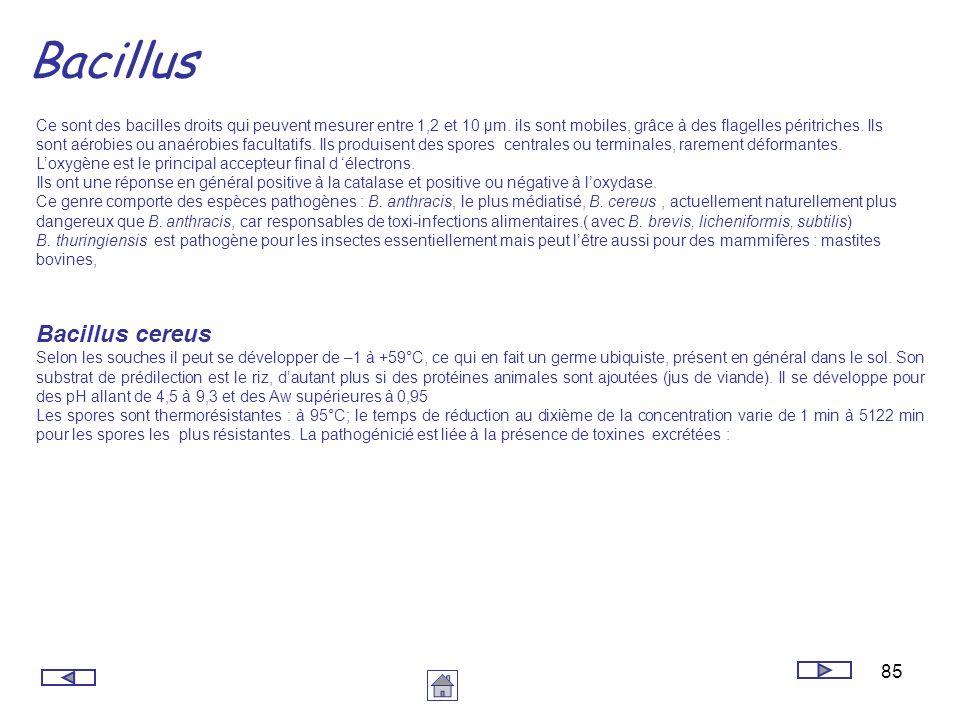 Bacillus Bacillus cereus