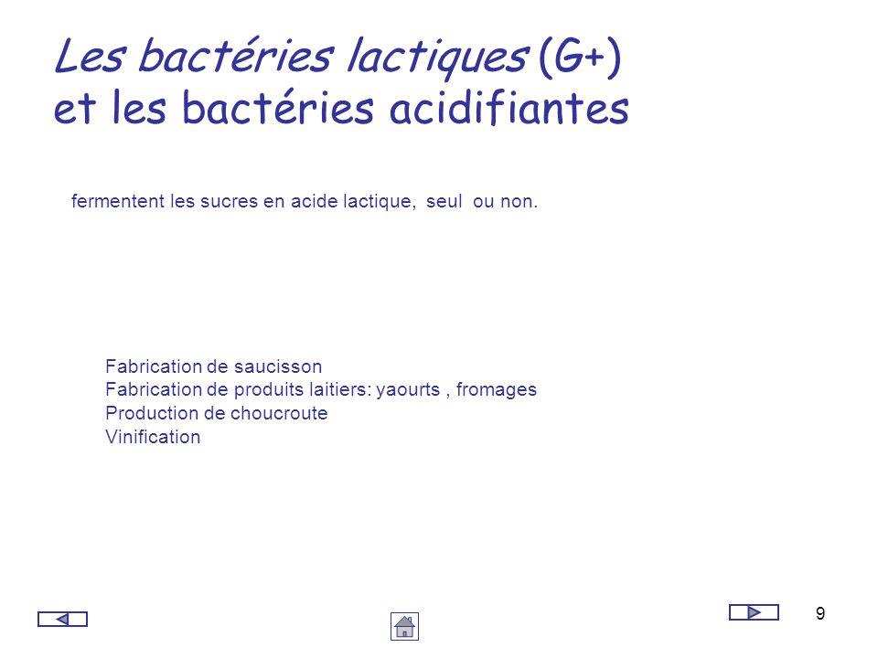 Les bactéries lactiques (G+) et les bactéries acidifiantes
